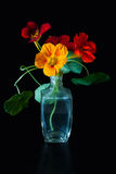 Bouquet of nasturtium. Stock Image