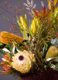 Bouquet of native Australian flowers. Dramatic bouquet of native Australian flowers, featuring banksias. Photographed on a grey background Stock Photography