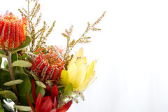 Bouquet of native flowers with red banksia and yellow protea. Against white background with copy space royalty free stock images