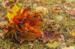 A bouquet of natural autumn colored leaves. Autumn. A bouquet of natural autumn colored leaves stock image