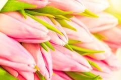 Bouquet naturel gentil des tulipes roses comme fond romantique Foyer sélectif Les tulipes roses se ferment vers le haut Fleurs ro Image stock
