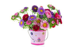 Bouquet New England Asters Stock Photo