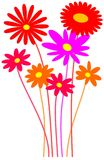 Bouquet. Nice bouquet of colorful flowers Royalty Free Stock Images