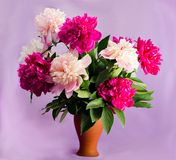 Bouquet of nine bright burgundy, tender pink and white peonies in a clay terracotta vase on a soft purple background royalty free stock photos