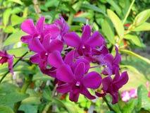 Bouquet normal photographie stock libre de droits