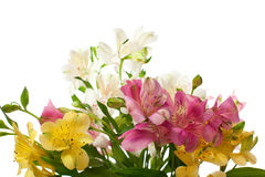 Bouquet Of Alstroemeria Flower Royalty Free Stock Image