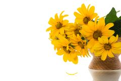 Free Bouquet Of Beautiful Blooming Yellow Daisies Isolated On White Stock Photos - 150736823