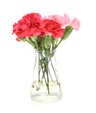 Bouquet Of Carnation In A Glass Bottle Stock Photography