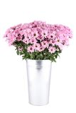 Bouquet Of Chrysanthemums Royalty Free Stock Photos