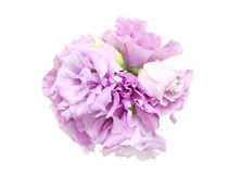 Bouquet Of Eustoma Royalty Free Stock Images