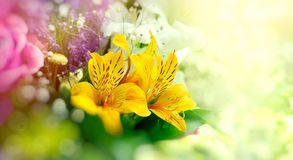 Free Bouquet Of Flowers, Beautiful Flower - Floral Arrangement Royalty Free Stock Image - 138357786