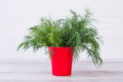 Free Bouquet Of Fresh Dill In Red Vessel. Stock Images - 115093604