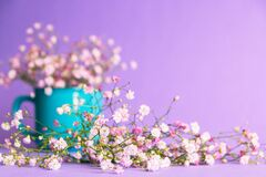 Free Bouquet Of Gypsophila In A Blue Mag On A Purple Background Royalty Free Stock Photo - 220351545