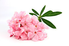 Bouquet Of Light Pink Flowers. Royalty Free Stock Photography