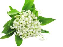 Bouquet Of Lily Of The Valley Flowers Royalty Free Stock Photo