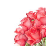 Bouquet Of Roses Royalty Free Stock Image