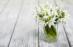 Free Bouquet Of Snowdrops Royalty Free Stock Photo - 70462075
