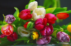 Free Bouquet Of Tulips Royalty Free Stock Photography - 51418517