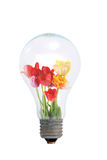 Bouquet Of Tulips In A Light Bulb Royalty Free Stock Images