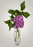Bouquet Of Violet Lilac In A Vase Stock Photo
