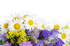 Free Bouquet Of Wild Camomiles Royalty Free Stock Image - 21149786