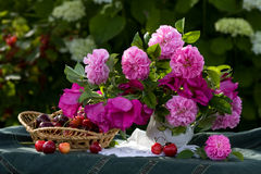Free Bouquet Of Wild Roses And Sweet Cherry Royalty Free Stock Photos - 11774918