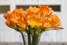 Bouquet of orange clivia flowers in glass vase. Royalty Free Stock Photos