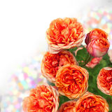 Bouquet orange de roses avec l'espace libre pour le texte Images stock