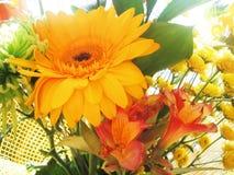 Bouquet of orange flowers Stock Images