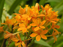 Bouquet of orange flowers. Orange flowers royalty free stock photography