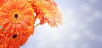 Bouquet of orange flowers Royalty Free Stock Photography