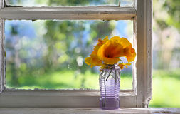 Bouquet of orange flowers on window. Rustic still stock image