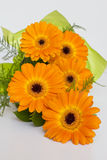 Bouquet of orange Gerbera. With ferns on a white background Royalty Free Stock Photos