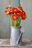 Bouquet of orange gerbera daisies Royalty Free Stock Photography