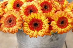 Bouquet of orange gerbera daisies in silver bucket Royalty Free Stock Photos