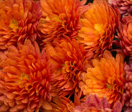 Bouquet of Orange Gerbera Daisy Royalty Free Stock Photography