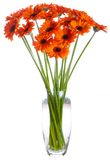 Bouquet of orange Gerbera flowers. Bouquet of Gerbera flowers in white background Royalty Free Stock Photo