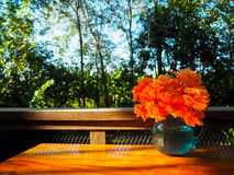 Bouquet of orange Hibiscus in glass jug on wooden table at open. Bouquet of beautiful orange Hibiscus in glass jug on wooden table at open deck under tree shade Royalty Free Stock Photography