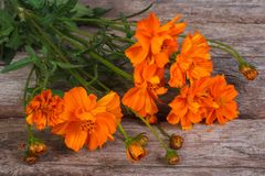 Bouquet of orange marigold flowers on old wooden Royalty Free Stock Photography