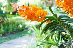 Bouquet of orange orchids flower close up under natural lighting outdoor Stock Photo