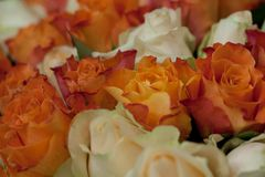 Bouquet of orange and pink roses. Big congratulatory bouquet of bright orange and pink roses stock photography