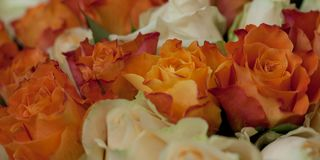 Bouquet of orange and pink roses. Big congratulatory bouquet of bright orange and pink roses stock photos