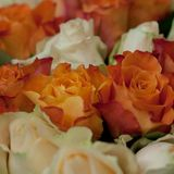 Bouquet of orange and pink roses. Big congratulatory bouquet of bright orange and pink roses royalty free stock image