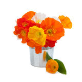 Bouquet of orange poppies on white Stock Photography