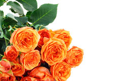 Bouquet of orange roses. Bouquet of beautiful orange roses isolated on white Stock Photos