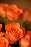 Bouquet of orange roses Royalty Free Stock Image