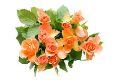 Bouquet of orange roses Stock Photos