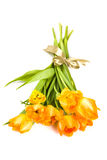 Bouquet of orange spring tulips Royalty Free Stock Images