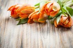 Bouquet of orange tulips stock photography