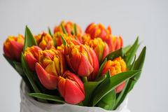Bouquet of orange tulips. Violet tulips in craft white  paper on white background Royalty Free Stock Images
